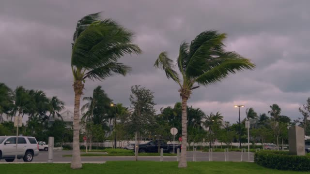 stormy strong wind bends palm trees in florida,usa - uragano video stock e b–roll