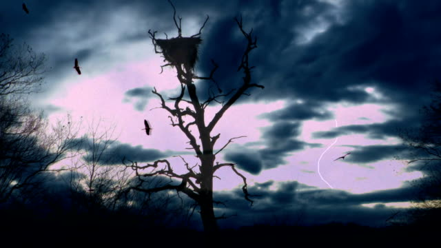 Stormy  tree Birds circulating over the dried tree with a nest before the storm (with lightning) vulture stock videos & royalty-free footage