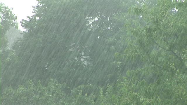 hd: le tempeste - pioggia torrenziale video stock e b–roll