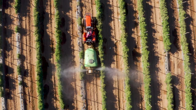 straight down aerial view of a tractor spraying pesticide onto tomatoes on a large scale vegetable farm - insetticida video stock e b–roll