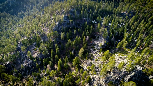 森林の上のまっすぐにドローンの角度 - カリフォルニアシエラネバダ点の映像素材/bロール