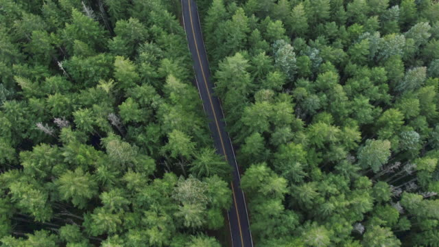 Straight Down: Road Surrounded by Tall Trees video