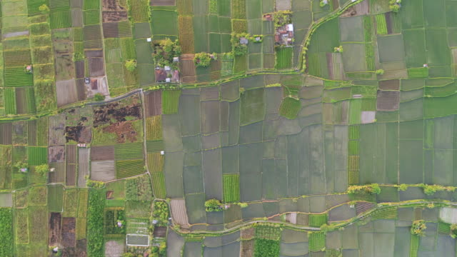 Straight-down shot high above rice fields Drone shot high above rice fields in Bali, Indonesia rice cereal plant stock videos & royalty-free footage