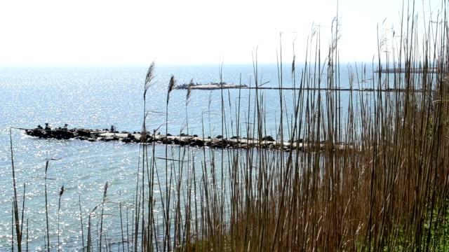 Straws on Cliff Near Sea video