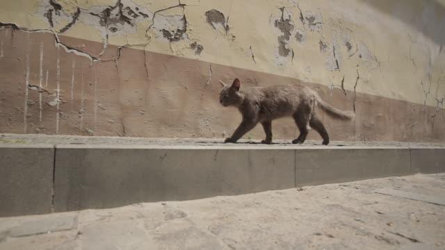 streunende verlassene obdachlose katze auf der straße gehweg auf wand hintergrund zu fuß und meowing - anmut stock-videos und b-roll-filmmaterial