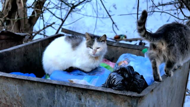 vídeos de stock e filmes b-roll de stray alley cats on a garbage bin in the big city. - lata comida gato
