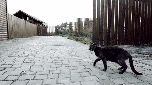 Stray black cat looking at the camera and run away. Slow motion. Stray black cat looking at the camera and run away. Slow motion. homeless person stock videos & royalty-free footage