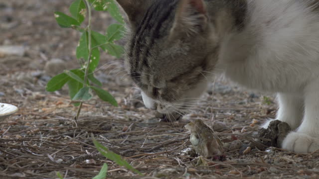 a stray cat eating fish close-up - rock formations stock videos & royalty-free footage