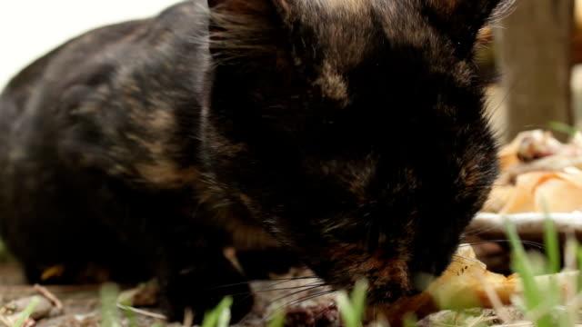 stray cat feeding outdoors - extreme close-up - кошка смешанной породы стоковые видео и кадры b-roll