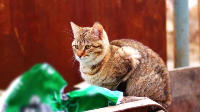 vídeos de stock e filmes b-roll de stray cat on a garbage bin in the city go away - lata comida gato