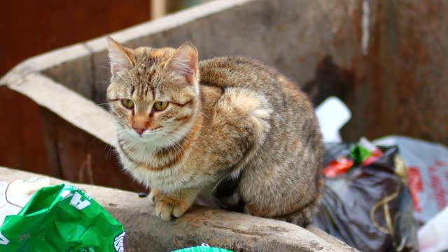 vídeos de stock e filmes b-roll de stray cat on a garbage bin in the city - lata comida gato