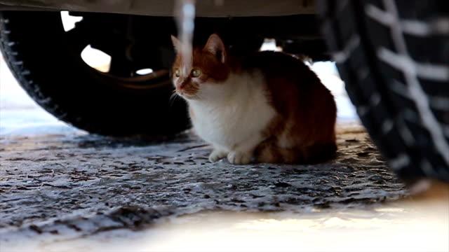 Parásito gato en la calle - vídeo