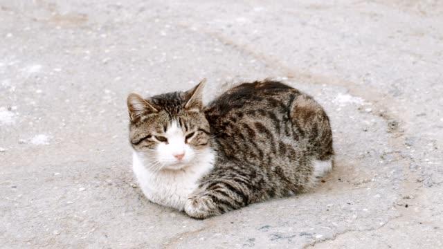 vídeos y material grabado en eventos de stock de gato callejero - vibrisas