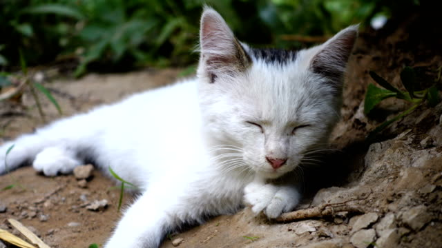 Stray cat Stray cat homeless shelter stock videos & royalty-free footage
