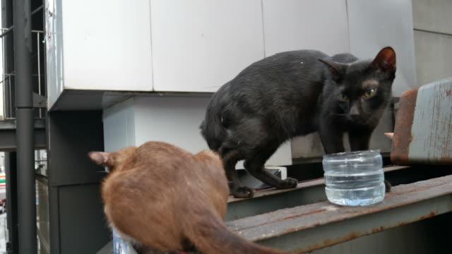 Stray cats video