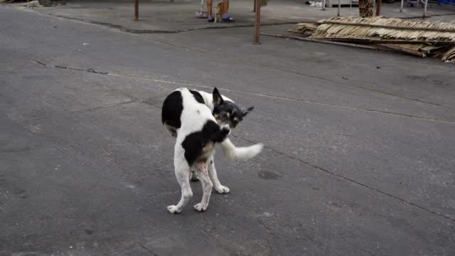 vídeos de stock, filmes e b-roll de cão perdido mordendo sua cauda - cauda