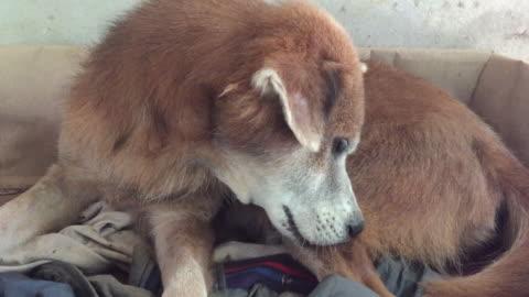 sokak köpeği köpek demodikoz - memeli stok videoları ve detay görüntü çekimi