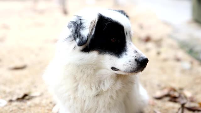 Stray dog close-up