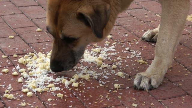 бродячая собака ест пищу - white background стоковые видео и кадры b-roll