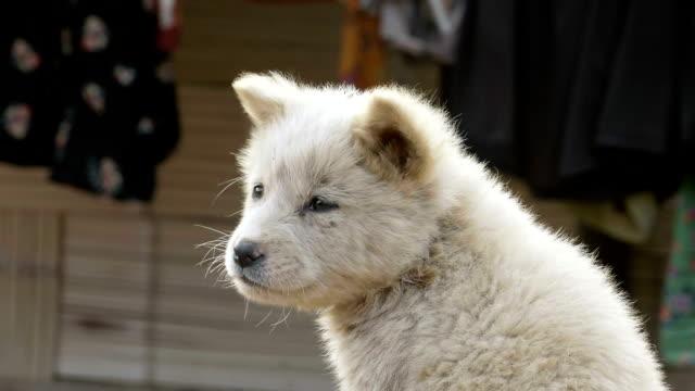 vídeos de stock e filmes b-roll de cão perdido, sem abrigo de cachorrinho - criança perdida