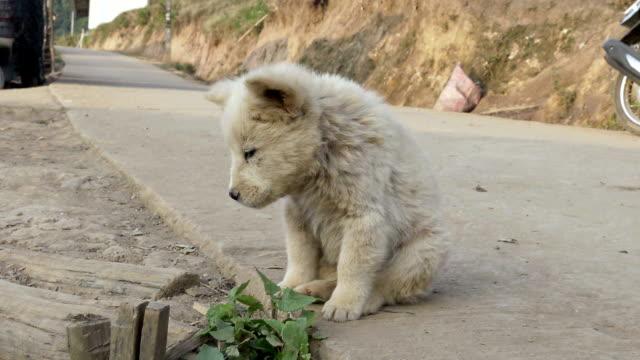 遊離犬、ホームレス子犬 - 打ち捨てられた点の映像素材/bロール