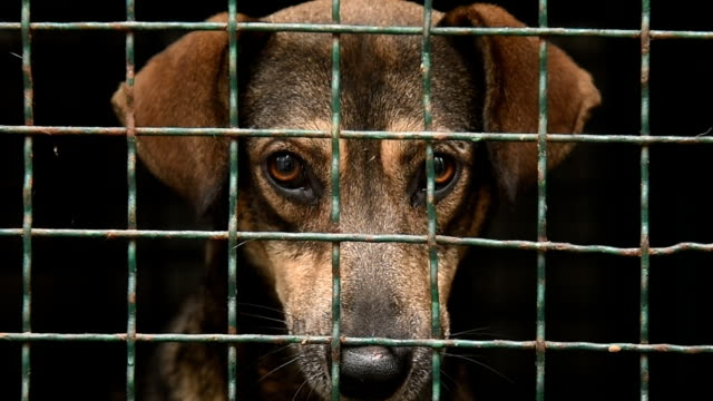 stray dog in a shelter cage stray dog in a shelter cage homeless shelter stock videos & royalty-free footage