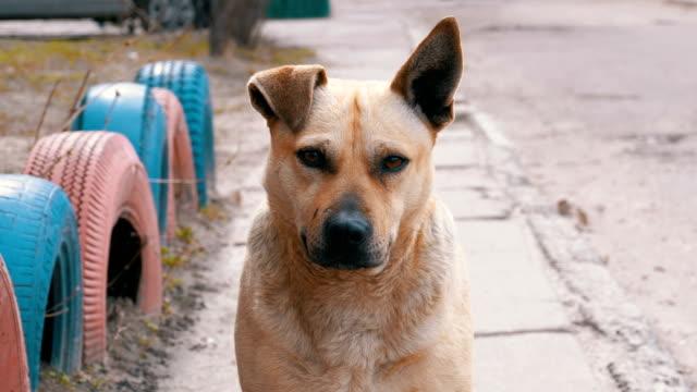 街の路上で迷子の犬。スローモーション - 打ち捨てられた点の映像素材/bロール