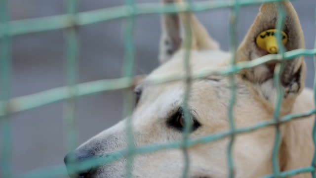 Stray Dog or Abandoned Dog in Cage video