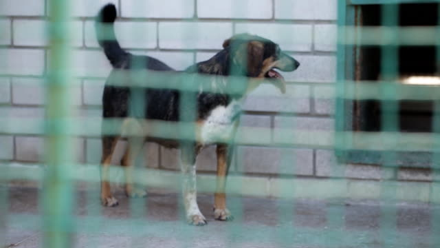 Stray dogs in the shelter Stray Dog or Abandoned Dog in Cage homeless shelter stock videos & royalty-free footage