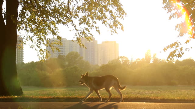 vídeos de stock, filmes e b-roll de vira-lata cães de corrida no parque da cidade, a bela natureza em urbana - largo descrição geral