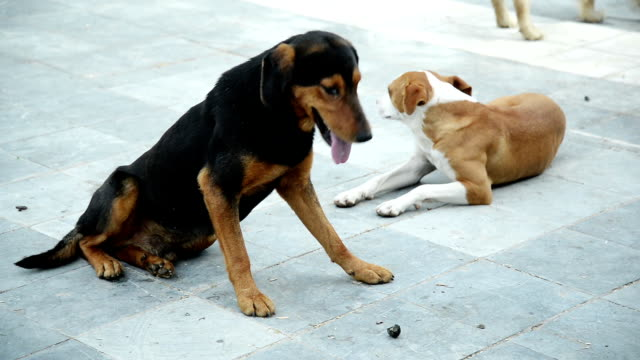 Stray dogs Video of stray dogs lying down on the street and resting. panting stock videos & royalty-free footage