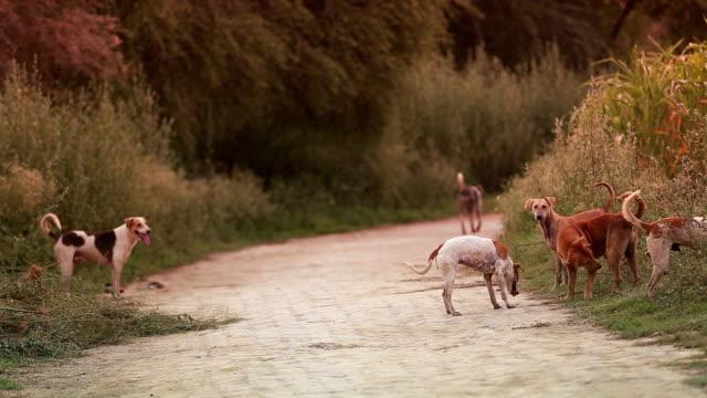 cani randagi - animale selvatico video stock e b–roll