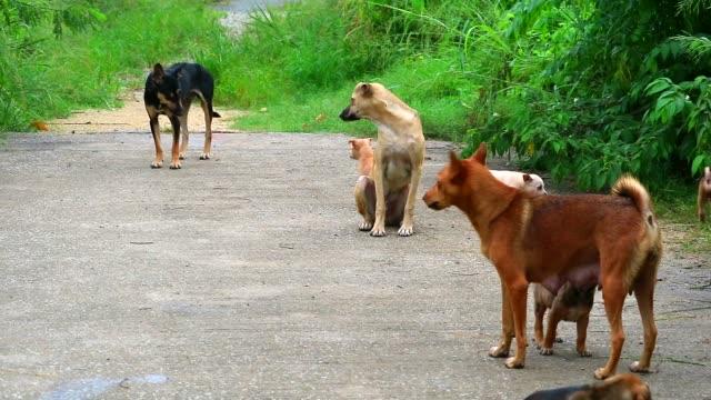 i cuccioli randagi mangiano latte materno in attesa di cibo dalle persone gentili1 - animale selvatico video stock e b–roll