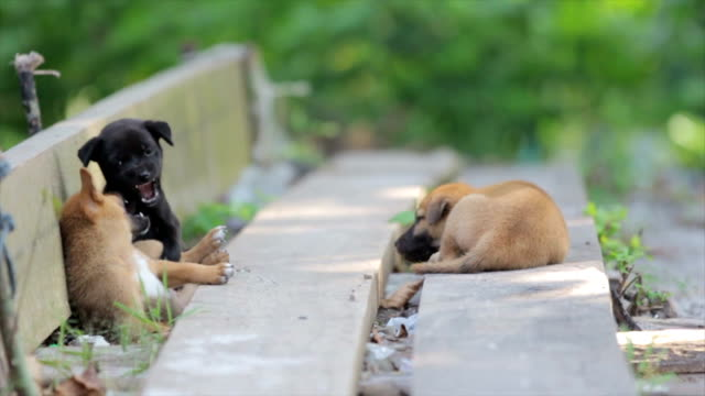 Stray Puppies Playing video