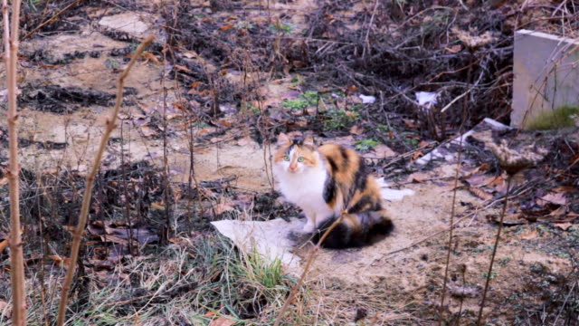 vídeos de stock e filmes b-roll de stray street cat near industrial zone - lata comida gato