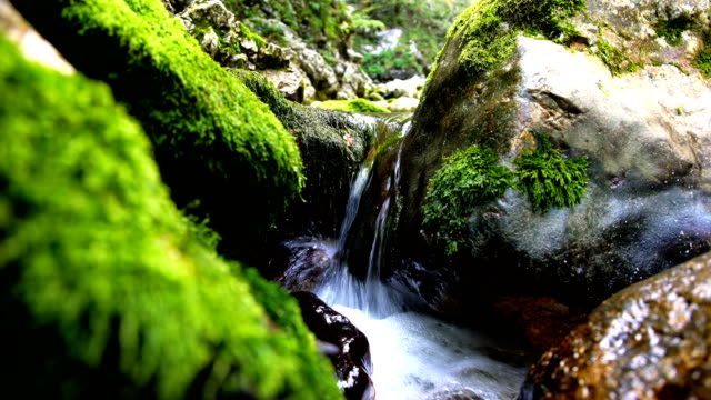 Stream flowing between moss-covered rocks. video
