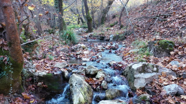 Stream Flowing In Autumn Forest stock video