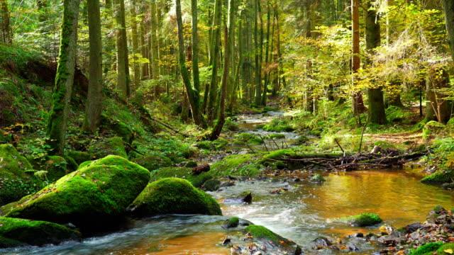 Stream Flowing In Autumn Forest video