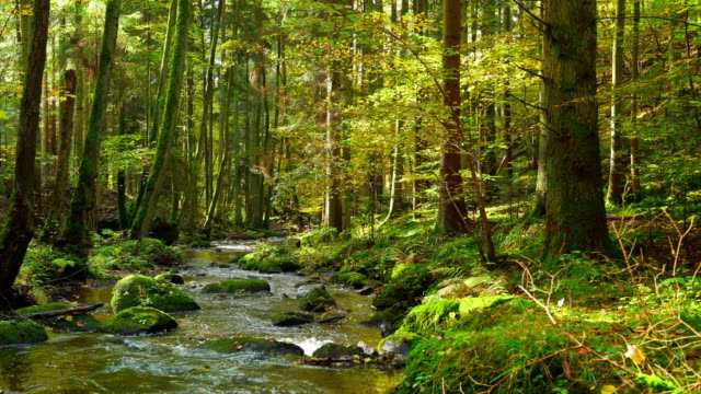 Stream Flowing In Autumn Forest video