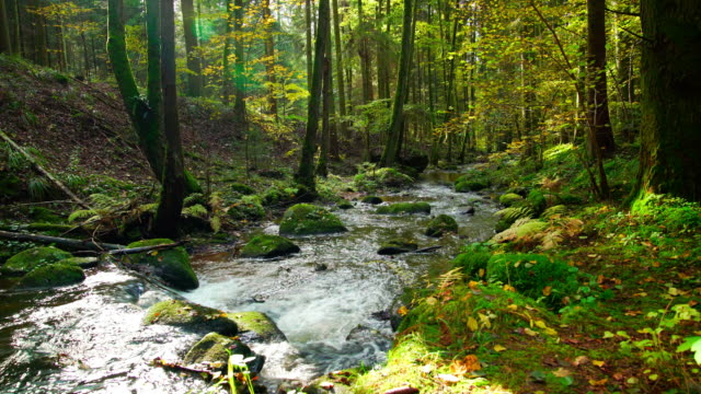 Stream Flowing In Idyllic Autumn Forest – film