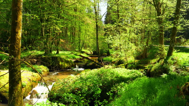 stream flowing in idyllic spring forest - rivulet 4k stock videos and b-roll footage