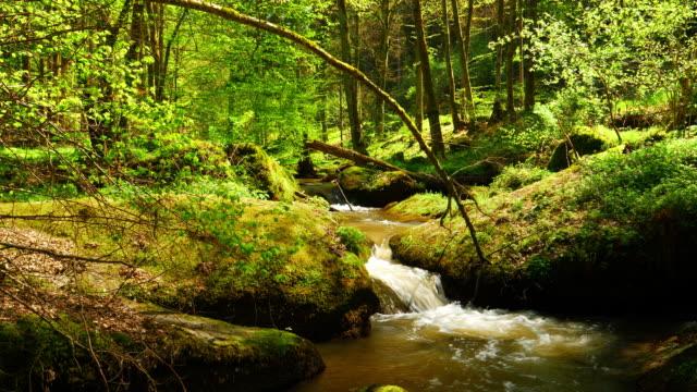 Stream Flowing In Idyllic Spring Forest – film