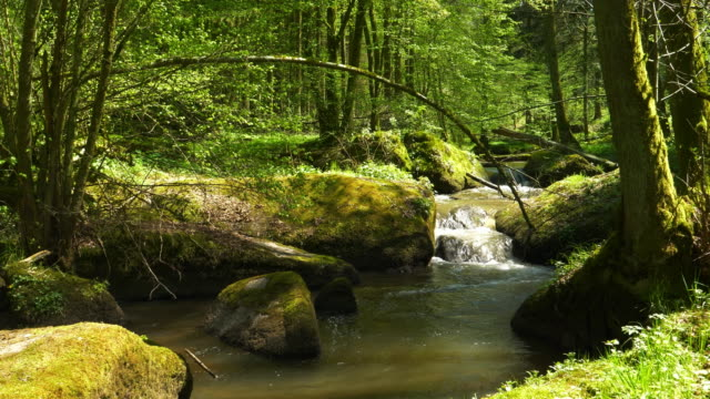 vídeos de stock e filmes b-roll de stream flowing in idyllic spring forest - water born nature