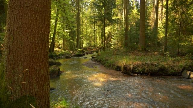 小溪的流水在田園詩般的春天森林 - 溪 個影片檔及 b 捲影像