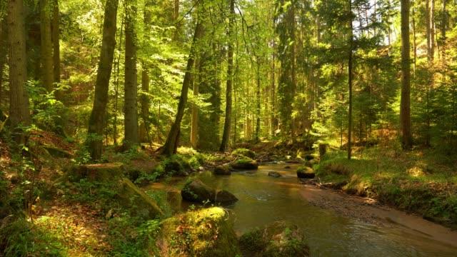 stream flowing in idyllic spring forest - ручей стоковые видео и кадры b-roll