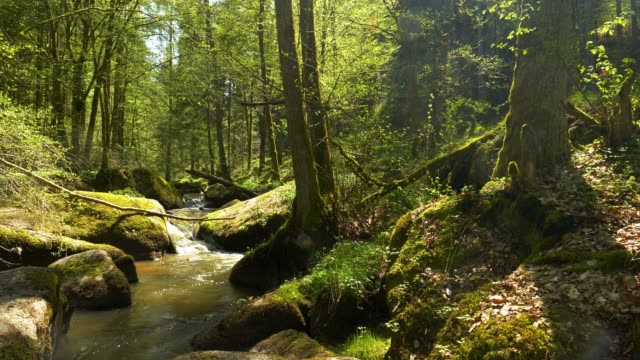 Stream Flowing In Rocky Spring Forest