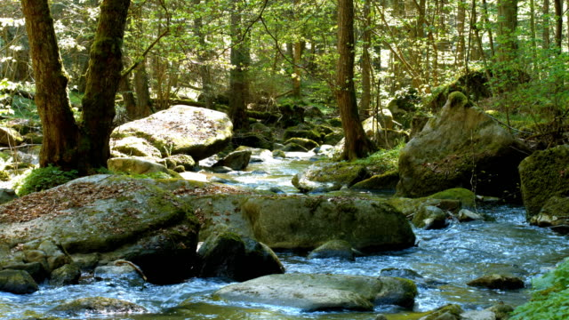 Stream Flowing In Sttony Forest – Video