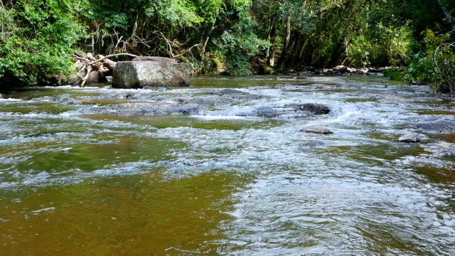 Stream flowing water in forest video