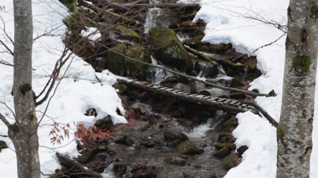 Stream in a mountain winter forest.