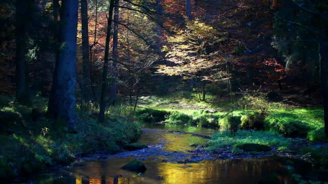 HD Stream in Autumn Forest (Loopable) Seamless loopable shot of stream in autumn forest.   Shot with LEICA Vario-Apo-Elmarit-R 70-180mm f/2.8 lens. wasser videos stock videos & royalty-free footage